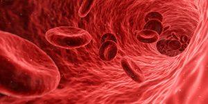 cellen en weefsels