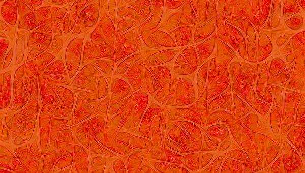 zenuwstelsel